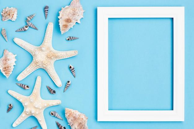 Vue de dessus des étoiles de mer et des coquillages avec cadre