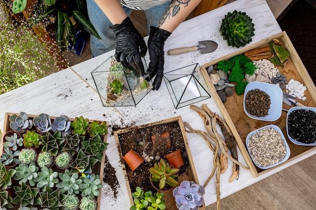 Vue de dessus femme jardinier mains dans des gants de protection arrangement succulentes dans des florariums en verre