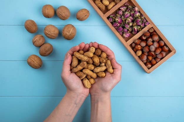 Vue de dessus femme tient dans ses mains les noix aux noisettes et arachides sur un tableau bleu