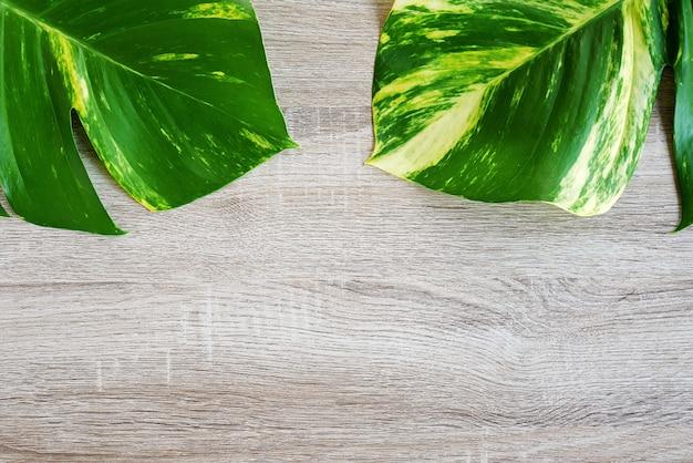 Vue de dessus d'une feuille tropicale verte (jungle monstera) sur fond en bois.