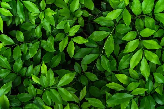 Vue de dessus d'une feuille verte naturelle pour le fond de la nature