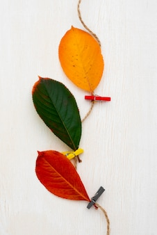 Vue de dessus des feuilles attachées avec de la ficelle
