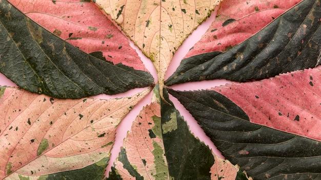 Vue de dessus des feuilles d'automne colorées
