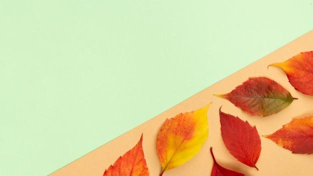 Vue de dessus des feuilles d'automne avec espace copie