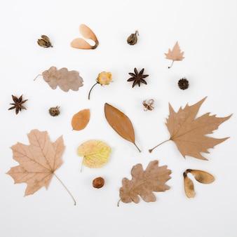 Vue de dessus feuilles d'automne à plat