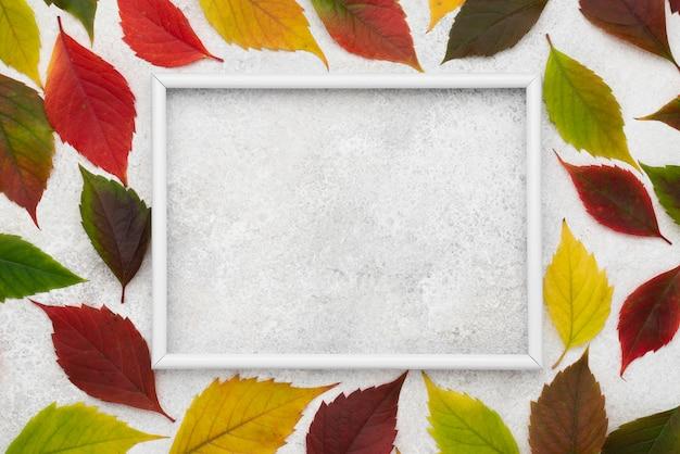 Vue de dessus des feuilles colorées avec espace copie et cadre