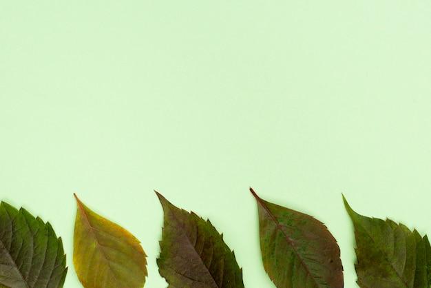 Vue de dessus des feuilles avec espace copie