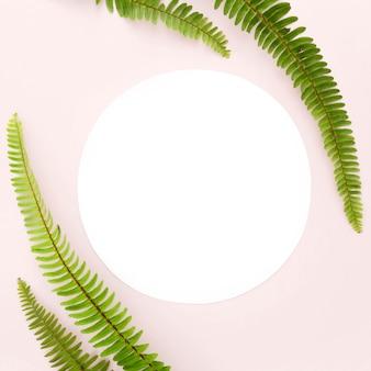 Vue de dessus des feuilles de fougère avec espace copie