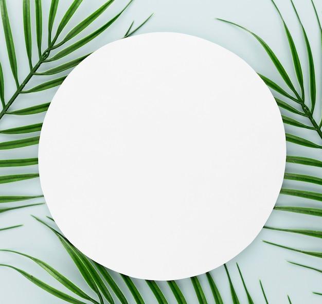 Vue de dessus des feuilles minces avec espace copie