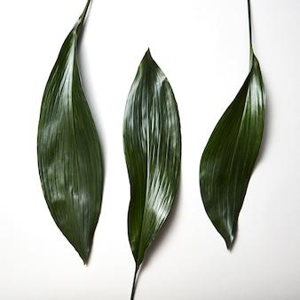 Vue de dessus des feuilles persistantes tropicales avec une texture rayée graphique isolée