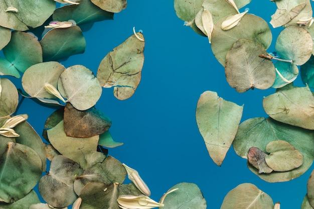 Vue de dessus des feuilles et des pétales dans l'eau bleue