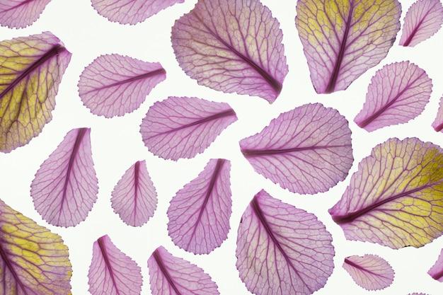 Vue de dessus des feuilles des plantes