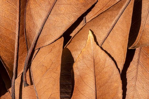 Vue de dessus des feuilles séchées