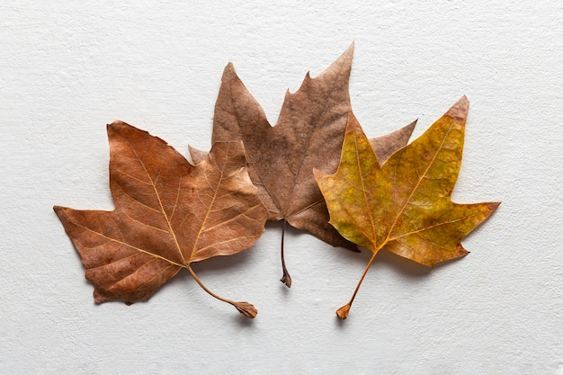 Vue de dessus des feuilles sèches