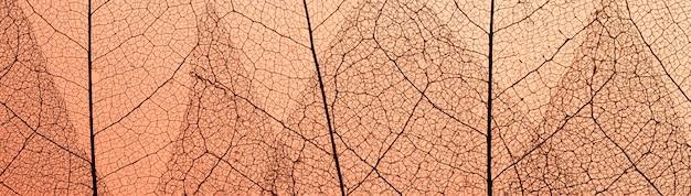 Vue de dessus des feuilles avec texture translucide