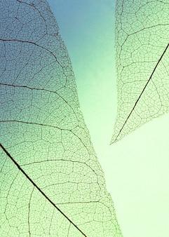 Vue de dessus des feuilles translucides de teinte colorée