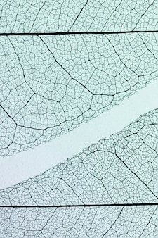 Vue de dessus des feuilles translucides avec teinte colorée