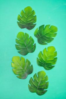 Vue de dessus de feuilles tropicales décoratives