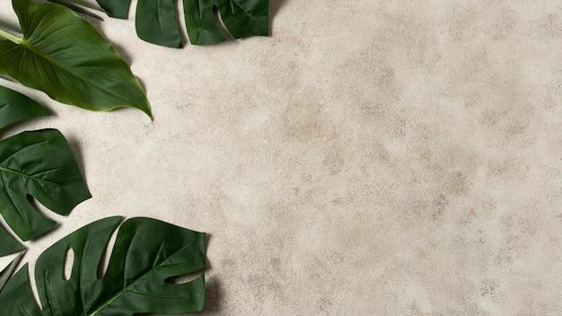 Vue de dessus des feuilles tropicales avec espace copie
