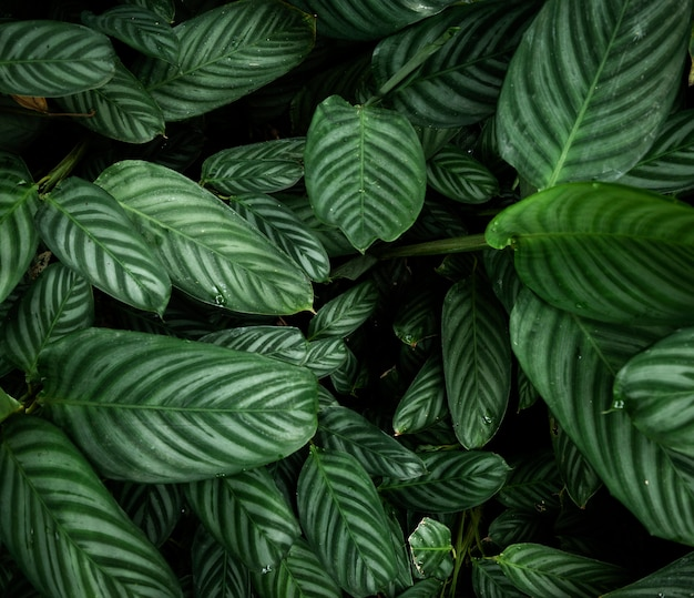 Vue de dessus des feuilles tropicales