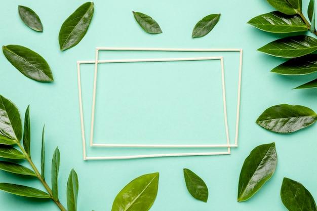 Vue de dessus feuilles vertes avec cadres