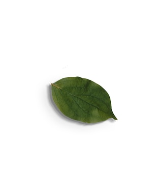 Vue de dessus des feuilles vertes isolées sur fond blanc.fit pour votre élément de conception.