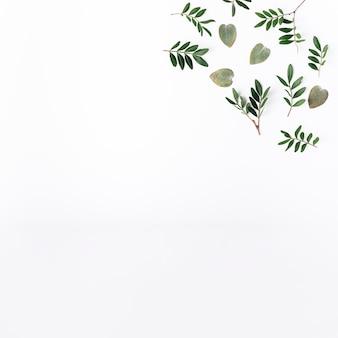 Vue de dessus des feuilles vertes
