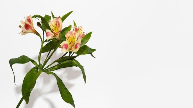 Vue de dessus de fleur de fleur