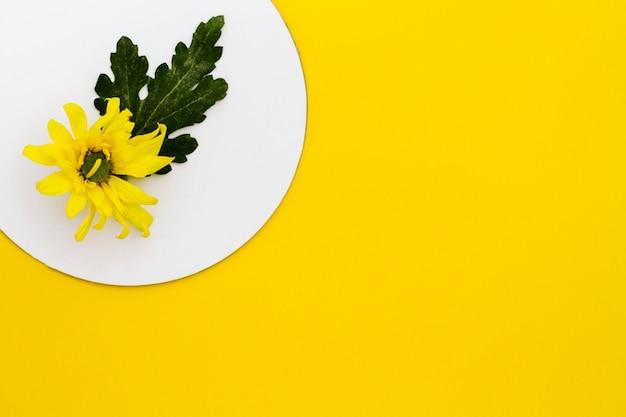 Vue de dessus fleur jaune avec fond