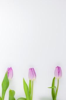 Vue de dessus d'une fleur pourpre fraîche sur fond blanc