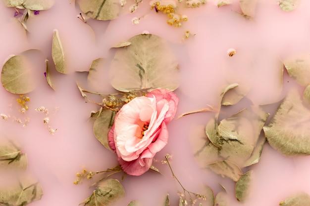 Vue de dessus fleur rose et feuilles pâles dans de l'eau colorée rose