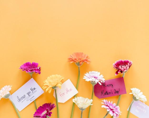 Vue de dessus des fleurs colorées avec espace copie