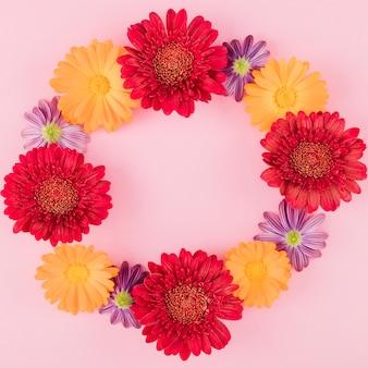 Vue de dessus des fleurs colorées