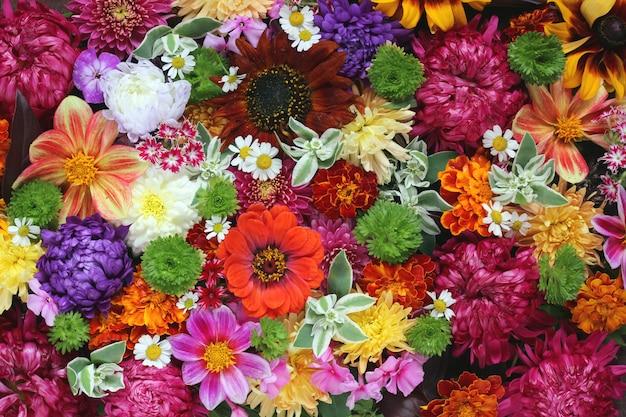 Vue de dessus de fleurs colorées