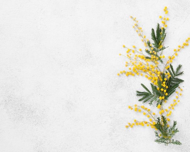 Vue de dessus des fleurs avec copie-espace