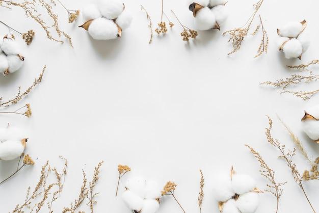 Vue de dessus des fleurs de coton