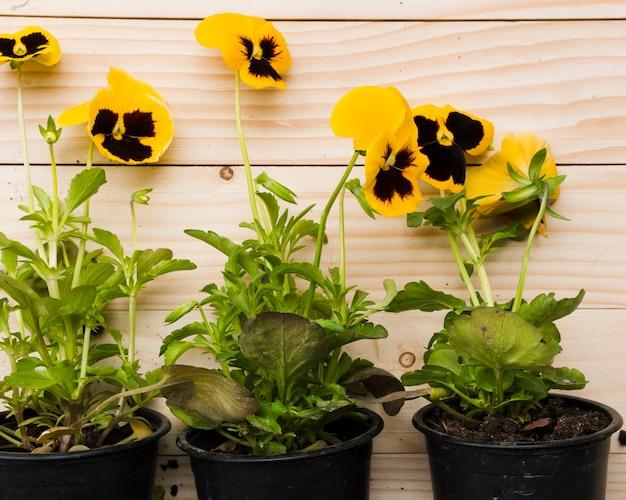 Vue de dessus des fleurs dans des pots de fleurs