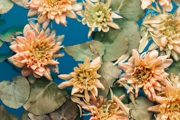 Vue de dessus des fleurs délicates dans l'eau bleue