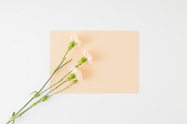 Vue de dessus des fleurs avec enveloppe