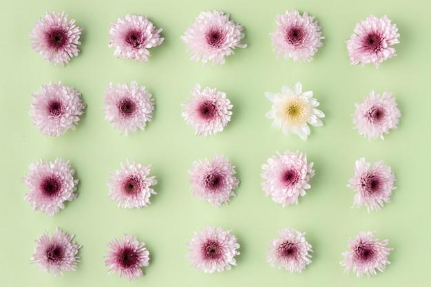 Vue de dessus fleurs épanouies