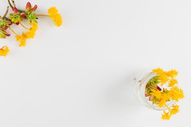 Vue de dessus des fleurs avec espace de copie