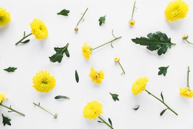Vue de dessus des fleurs et des feuilles