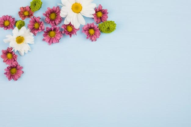 Vue de dessus de fleurs fraîches