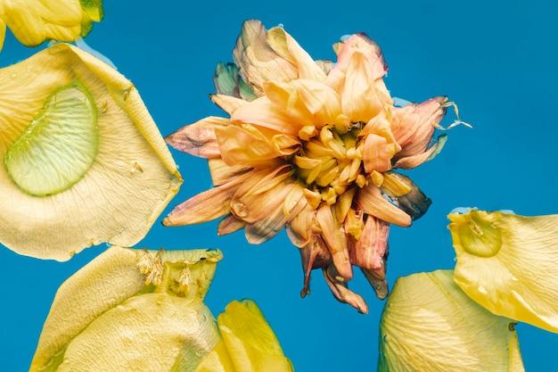 Vue de dessus des fleurs jaunes en gros plan de l'eau bleue