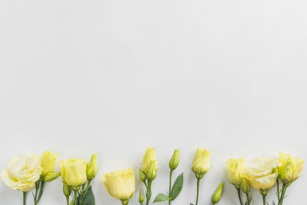 Vue de dessus de fleurs jaunes