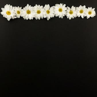 Vue de dessus des fleurs de marguerite