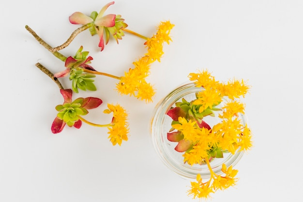 Vue de dessus fleurs et pétales jaunes