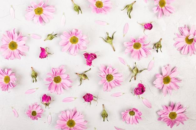 Vue de dessus des fleurs et des pétales de marguerite rose