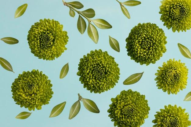 Vue de dessus des fleurs de printemps avec des feuilles
