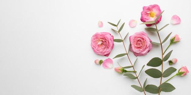 Vue de dessus fleurs roses avec espace copie